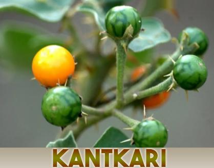 https://nutricare.in/wp-content/uploads/2021/08/Kantkari.jpg