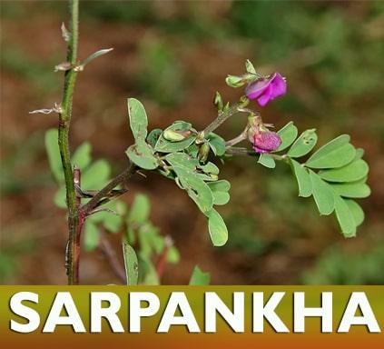 https://nutricare.in/wp-content/uploads/2021/08/Sarpankha.jpg